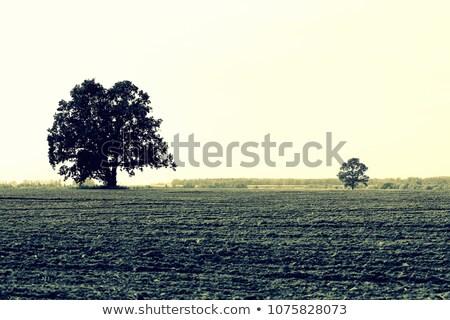 Very old and broken trees  Stock photo © ondrej83