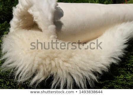 rolled leather surface Stock photo © prill
