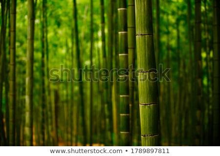 Bambu forrest çit büyüyen yakın Stok fotoğraf © Klinker