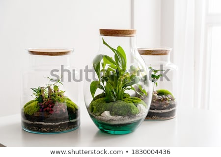 A jar with a green plant Stock photo © bluering