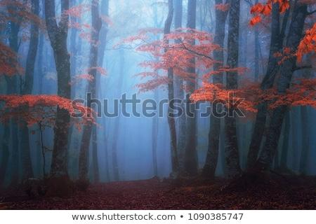 tavasz · erdő · napsütés · fenséges · természet · tartalék - stock fotó © digoarpi