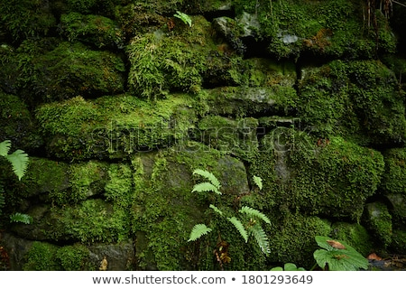 ancient masonry overgrown with moss Stock photo © fogen