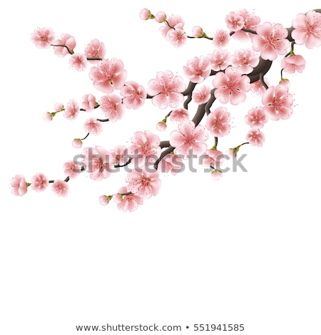 セット · 桜 · 日本 · 桜 · 現実的な · 支店 - ストックフォト © beholdereye