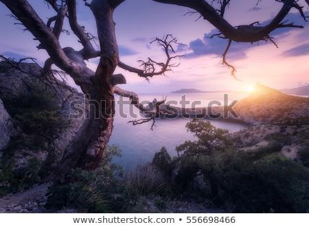 Velho árvore rocha mar exemplo sobrevivência Foto stock © Kotenko