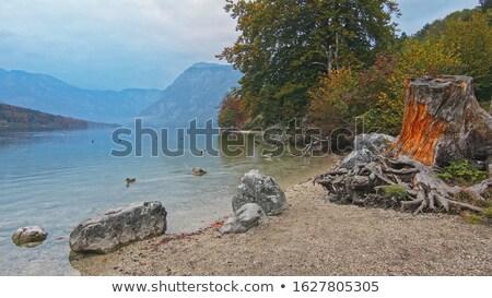 beautiful bohinj lake landscape on cloudy autumn day stock photo © stevanovicigor