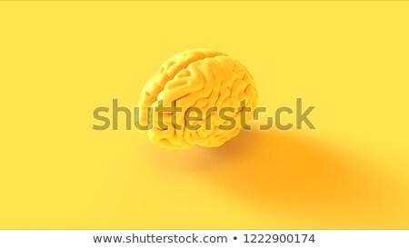Human Brain Shape with Lamp Stock photo © alexaldo