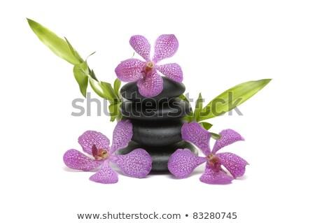 Szerencsés bambusz három orchidea virág fehér Stock fotó © Epitavi