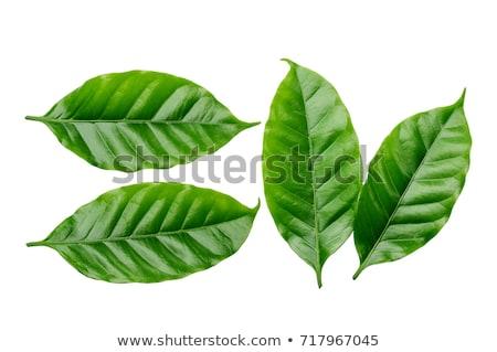 Stok fotoğraf: Kahve · yaprakları · yaratıcı · fotoğraf · kahve · fincanı · gri