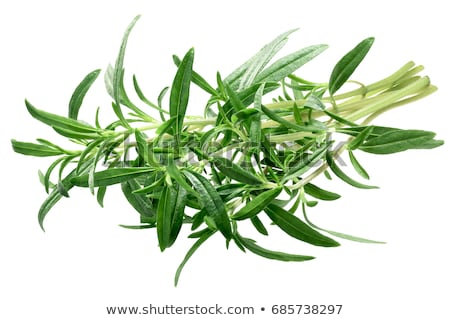 Summer savory Satureja hortensis plant, paths Stock photo © maxsol7