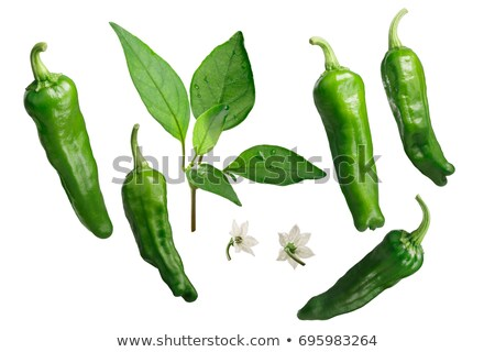Shishito peppers as elements, paths for each Stock photo © maxsol7