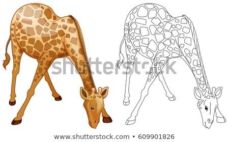 Animal girafa ilustração arte Foto stock © colematt