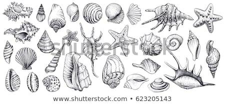 ракушки рисованной набор эскиз дизайна Элементы Сток-фото © frescomovie