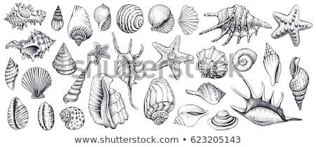 Seashells hand drawn set. Stock photo © frescomovie