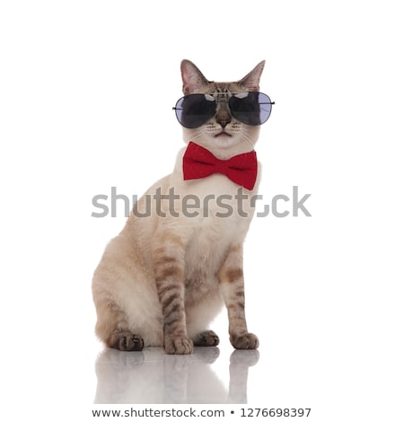 cute grey metis cat wearing sunglasses and red bowtie Stock photo © feedough