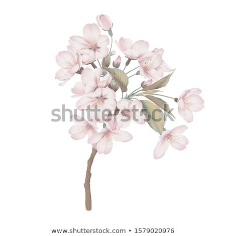 Evergreen rosa copia spazio top view albero Foto d'archivio © neirfy