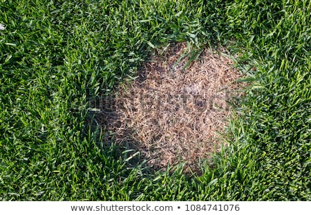 Lawn Disease Stock photo © Lightsource