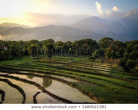 риса полях холмы зеленый пейзаж гор Сток-фото © vapi