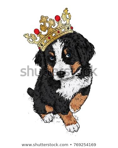 Bernese Mountain Dog Dog Breed Cartoon Retro Drawing Stock photo © patrimonio