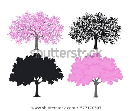 Sakura Asya ağaç renk Stok fotoğraf © pikepicture
