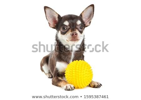 Stúdiófelvétel imádnivaló áll szürke szem állat Stock fotó © vauvau