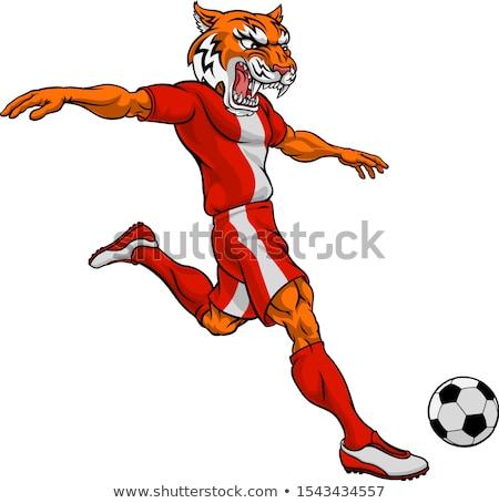 Vadmacska futball futballista sportok kabala rajzolt állat Stock fotó © Krisdog