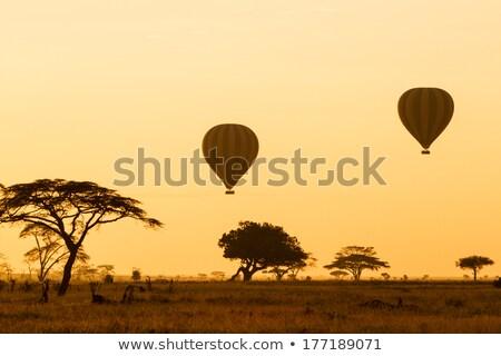 Hőlégballon Serengeti hajnal forró levegő léggömbök Stock fotó © photoblueice