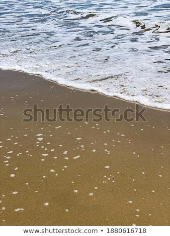 Foamy Ocean Shoreline at a Sunny Beach  Stock photo © Frankljr