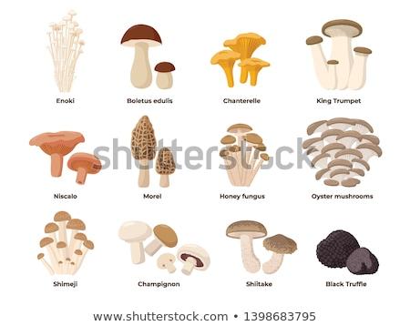 vetor · cogumelo · isolado · inteiro · metade - foto stock © Mcklog