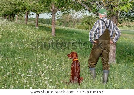 hunter with his dog hunting stock photo © phbcz
