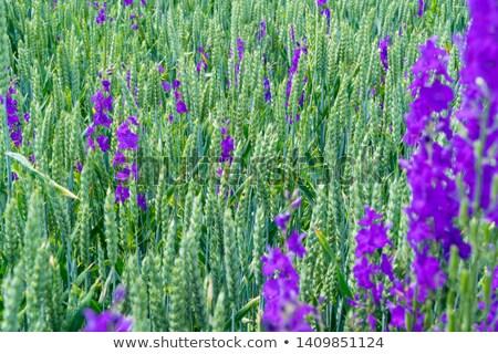 prado · flor · abstrato · natureza · projeto · folha - foto stock © imaster