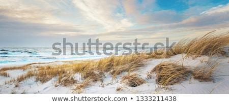 Coastal Landscape Stock photo © photography33