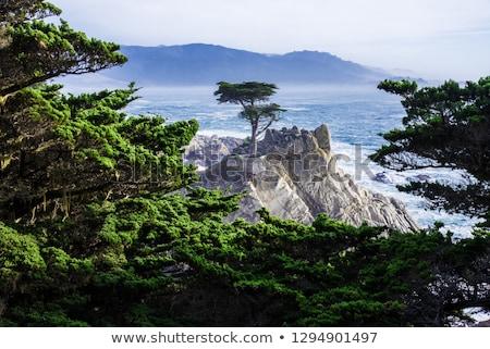 Sozinho sentinela farol areia ilha céu Foto stock © smithore