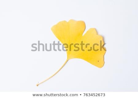 Yellow ginkgo leaves background Stock photo © Arrxxx