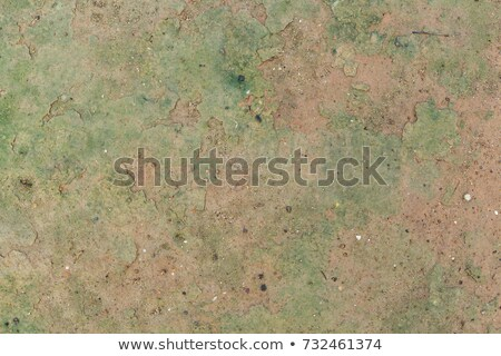 arid forest ground stock photo © prill