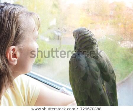 vicces · papagáj · szomorú · rajzfilmfigura · izolált · fehér - stock fotó © rastudio