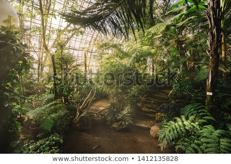 Beautiful Old Greenhouse Stock photo © franky242