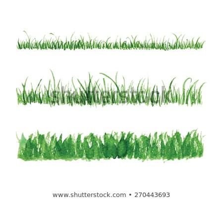 緑の草 水 太陽 ベクトル 空 春 ストックフォト © krabata