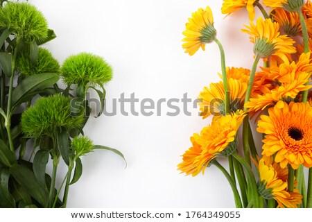 een · oranje · bloem · geïsoleerd · witte - stockfoto © lianem