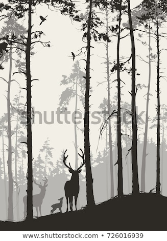 deer in the spruce forest at night stock photo © ustofre9
