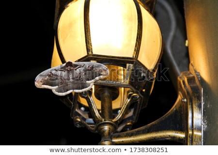 Large moth sitting on a lamp Stock photo © michaklootwijk