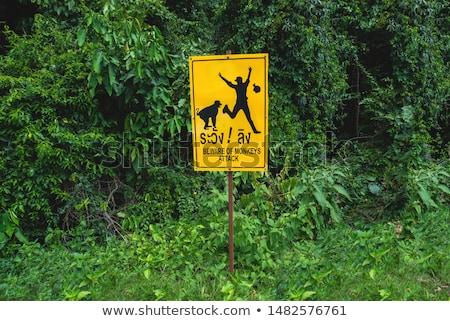 Apen kinderen aap bos voedsel kid Stockfoto © meinzahn