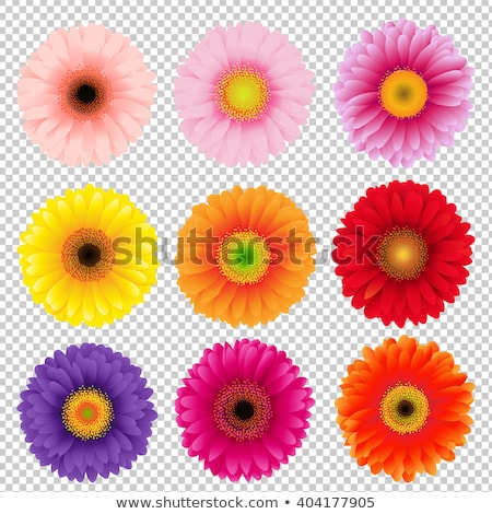 Quadro gradiente flor natureza aniversário Foto stock © adamson