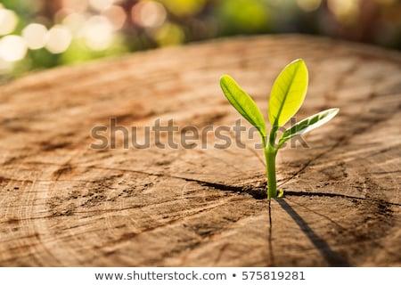 Plant hand blauwe hemel zon licht Stockfoto © fantazista