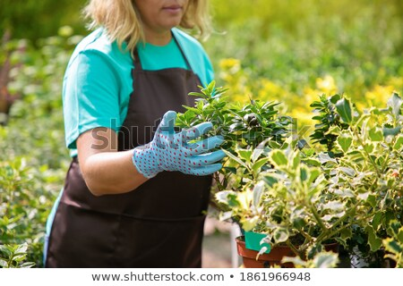 Evergreen plant the Thuja and a sunny day Stock photo © vavlt