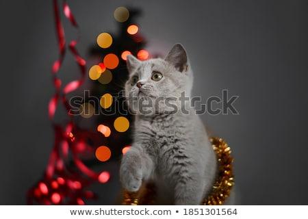 kat · christmas · decoratie · kitten · Rood - stockfoto © marimorena