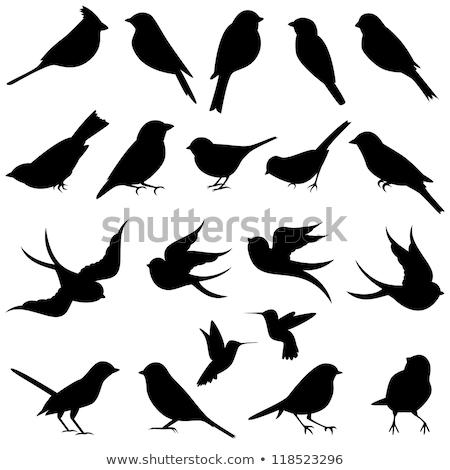 Vector of bird perching on branch. Stock photo © Morphart