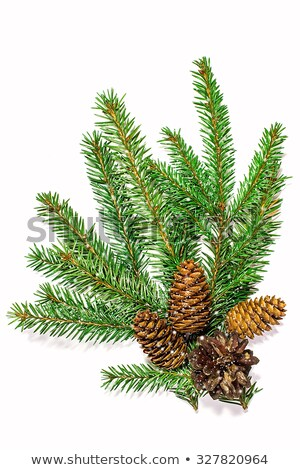 Pine branch with cone with falling snow Stock photo © Valeriy