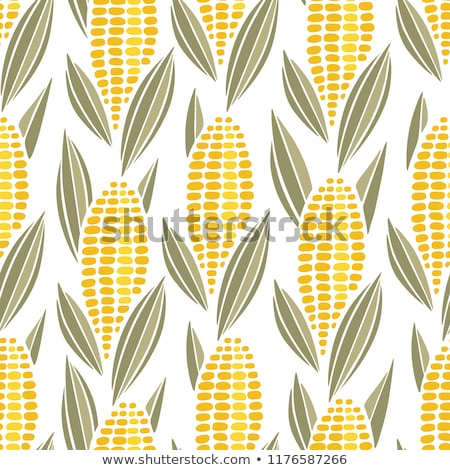 Stock photo: Corn seamless food vector background isolated cob plant.