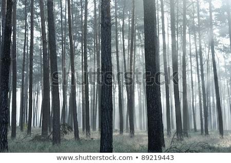 mistik · orman · güneş · rays · sis · doğa - stok fotoğraf © zurijeta