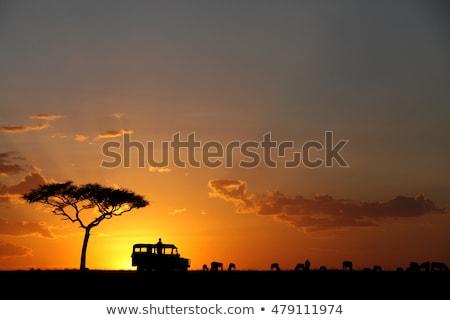Dzsip szafari naplemente illusztráció autó sziluett Stock fotó © adrenalina